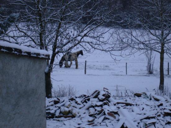 BLUE ICE cherche un endroit pour se rouler dans la neige fraiche!!!