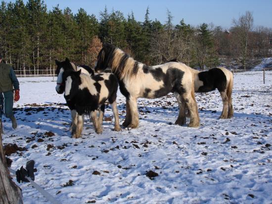 décembre 2009 sous la neige!!
