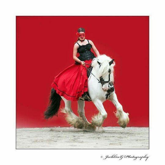 Tierney equestria 2016 n 1