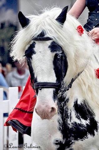 Tierney equestria 2016 n 2